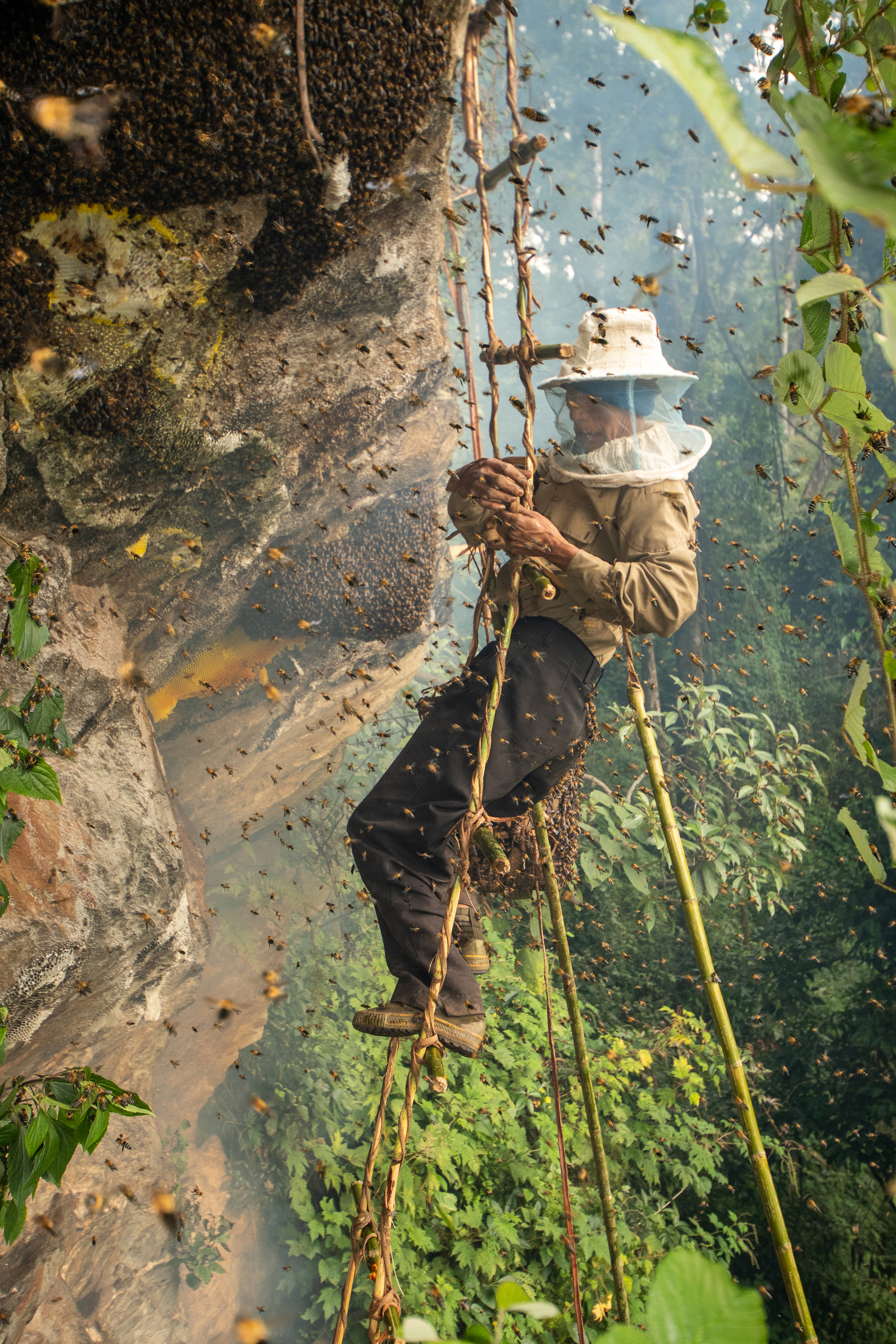 Honey hunters of Nagaland